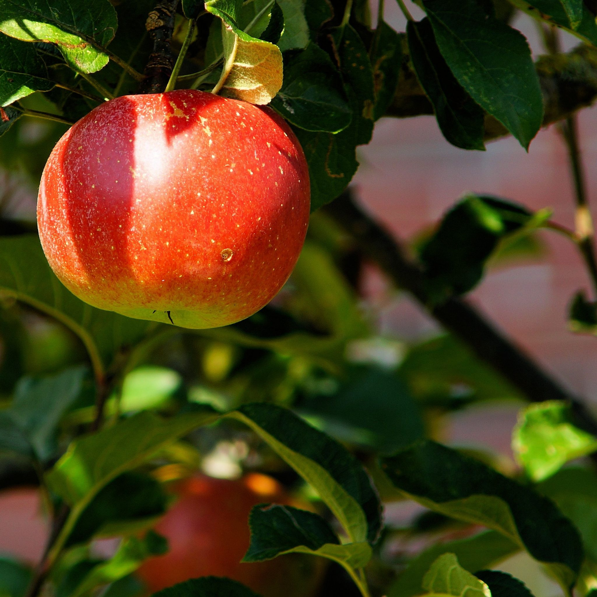 An Experience Ripe for the Picking: Your Guide to Apple Picking in Lebanon Valley